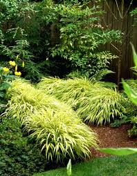 ornamental grasses for sun uk areas or shade