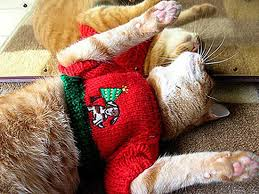 sweaters for cats sweaters for dogs and cats popsugar pets