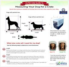 belgian malinois size at 6 months how to measure your pet for their travel crate saar kennels