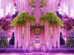 fleur de lis chagne flutes 36 best sweet lilac images on lilacs colourful hair