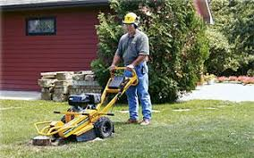 stump grinder rental near me stump grinder small rentals edmonds wa where to rent stump