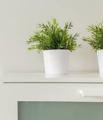 dormir avec une plante dans la chambre dormir avec des plantes dépolluantes
