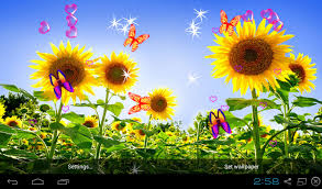 sunflower wallpapers free 3d sunflower wallpapers apk download for android getjar