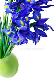 border of blue iris cut flowers in a green vase stock photos