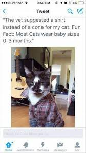 Hipster Cat Meme - ᖴᘢᘗᘗᖻ ᗗᘙᓿᙢᗋᒸ ᙜᕦᙏᕩᔙ ʕ ᴥ ʔ lsimhbiwfefmtalol