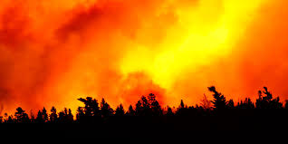 How Many Wildfires In Canada by Bark Beetles Wildfires And Our Forests 5 Questions For Dr