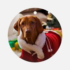 hungarian wirehaired vizsla gifts merchandise hungarian