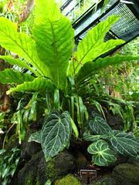 Vertical Gardens Miami - image result for tropical garden miami garden vertical gardens