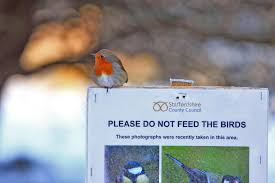 european robin perched on a signboard asking people not to feed