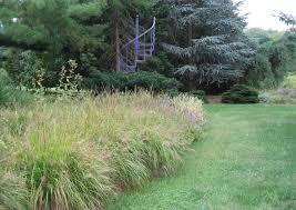 ornamental grasses in all their homestead gardens inc
