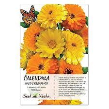 calendula flowers package of 500 seeds calendula pacific beauty