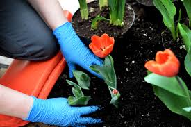 these twin cities garden centers will get you digging