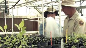 native plant nurseries oregon song dog native plant nursery youtube