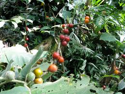 native plants in the amazon rainforest a garden in motion indigenous amazonian permaculture ayahuasca com