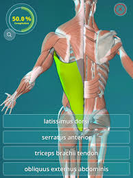 Human Anatomy Quizes Anatomy Quiz 3d Human Android Apps On Google Play
