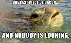Turtle Memes - sneaky sea turtle meme on imgur