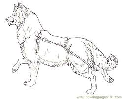 dog coloring pages online 90 best dog pic images on pinterest dog pic coloring books and