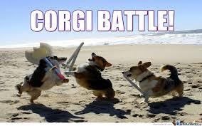 corgi battle by salaminizer meme center