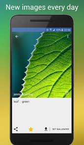 leaf green apk free wallpapers qhd apk 1 3 21 free apk from apksum
