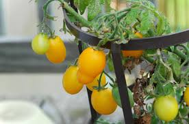 Fruit Garden Ideas Fruit Garden Descriptions Photos Advices Home
