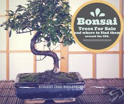 best 25 bonsai nursery ideas on buy bonsai tree