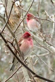 35 best birds of my backyard images on pinterest backyard birds