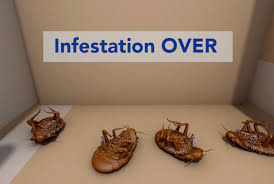 How To Kill Bed Bugs At Home Bedbugs Beware New Research May Beat Back Bedbug Epidemic Penn