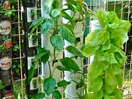 How To Grow Vegetables by Vertical Gardening U2013 Page 3 U2013 Container Gardening