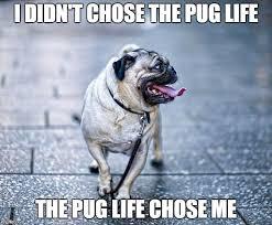 Funny Pug Memes - dog humor and memes google