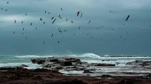 Sea Storm Wallpaper 6809018