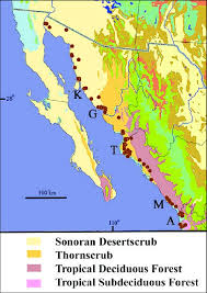 Map Of Mexico Coast by Southern Distributional Limits Of The Sonoran Desert Herpetofauna