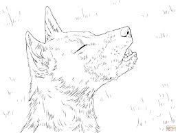 new guinea singing dog portrait coloring page free printable