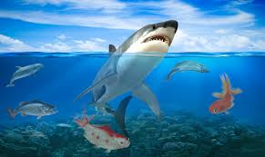 shark apk hungry shark attack evolution simulator 3d 1 1 apk androidappsapk co