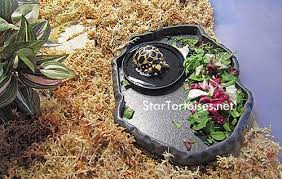 Tortoise Bedding Food U0026 Water Dishes For Small Tortoises