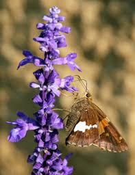 create a butterfly garden u2013 master gardener program