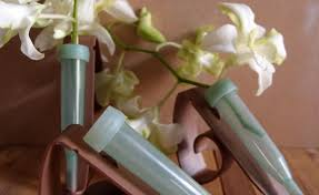 Pew Clips Flower Vials Tubes Gardening Flower And Vegetables