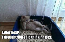 Thinking Cat Meme - lolcats litter box lol at funny cat memes funny cat pictures