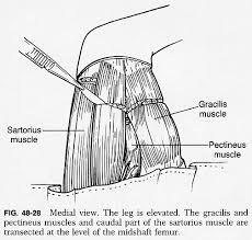 Dog Anatomy Front Leg 48f28 Jpg