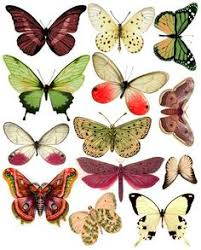 instant art printable antique butterflies and moths graphics