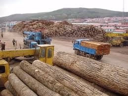 wood in russian timber thieves selling wood in america