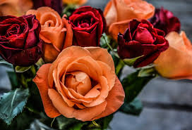 color roses say it with a choosing the right color cheers and