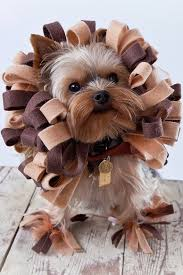 Cheap Dog Costumes Halloween 25 Pet Costumes Dogs Ideas Halloween