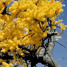 australian plants australian plant information