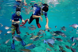 Delaware Snorkeling images Cura ao world class beach snorkeling curacao cruise jpg