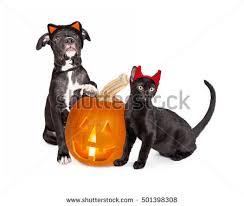 Kitten Halloween Costume Cat Costume Devil Halloween Wearing Stock Images Royalty Free