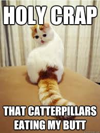 holy crap that catterpillars eating my butt wtf cat quickmeme