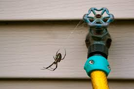 cooler weather brings spiders how to prevent an infestation