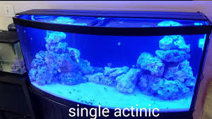 current usa orbit marine aquarium led light current orbit marine led lighting system orbit marine led current