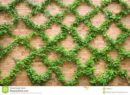 criss crossing vines stock photography image 15886872