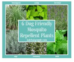 best plant for mosquito repellent dog friendly decks natural dog safe mosquito control kol s notes